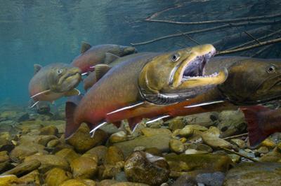Deschutes basin conservation plan under public scrutiny
