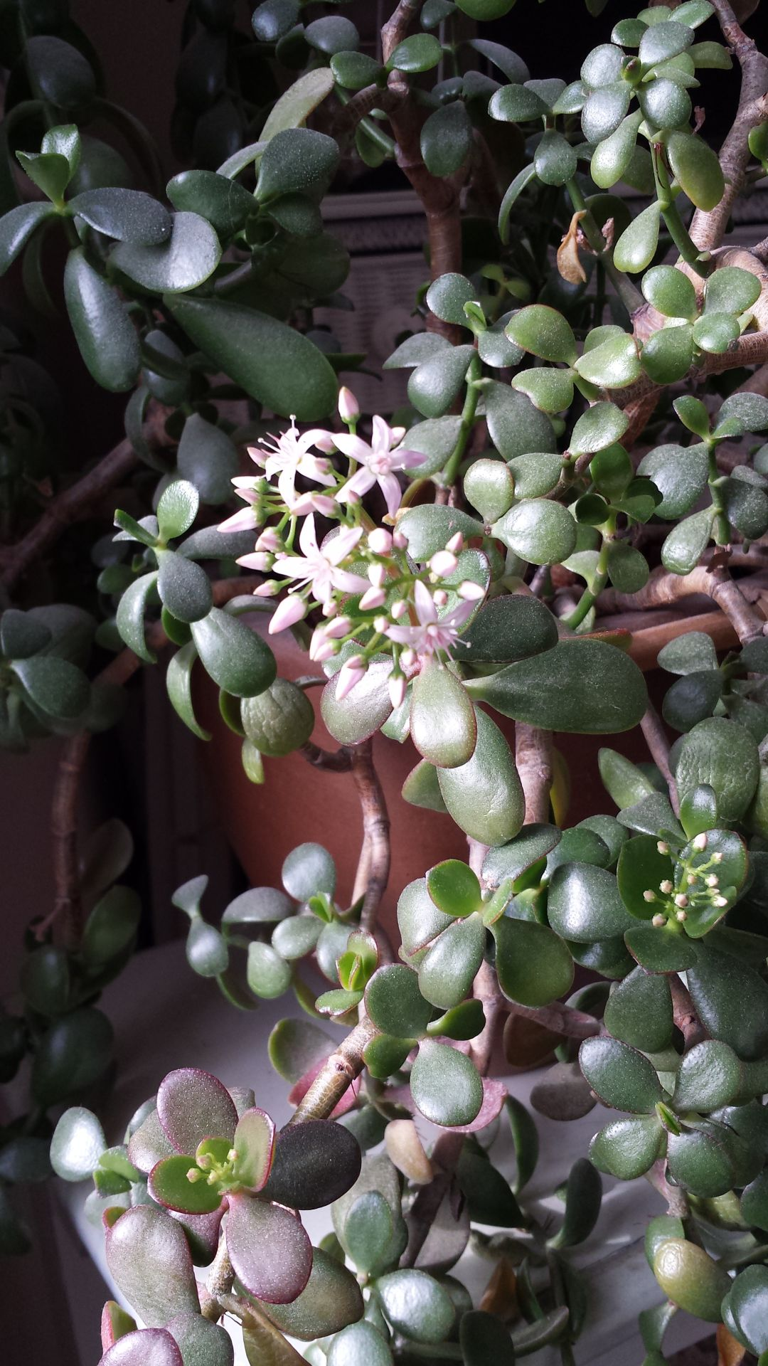 Janet Stevens column: Neglect brings out the best in house plant (copy)