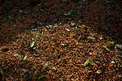 Wild weather in biggest coffee exporter sparks price surge