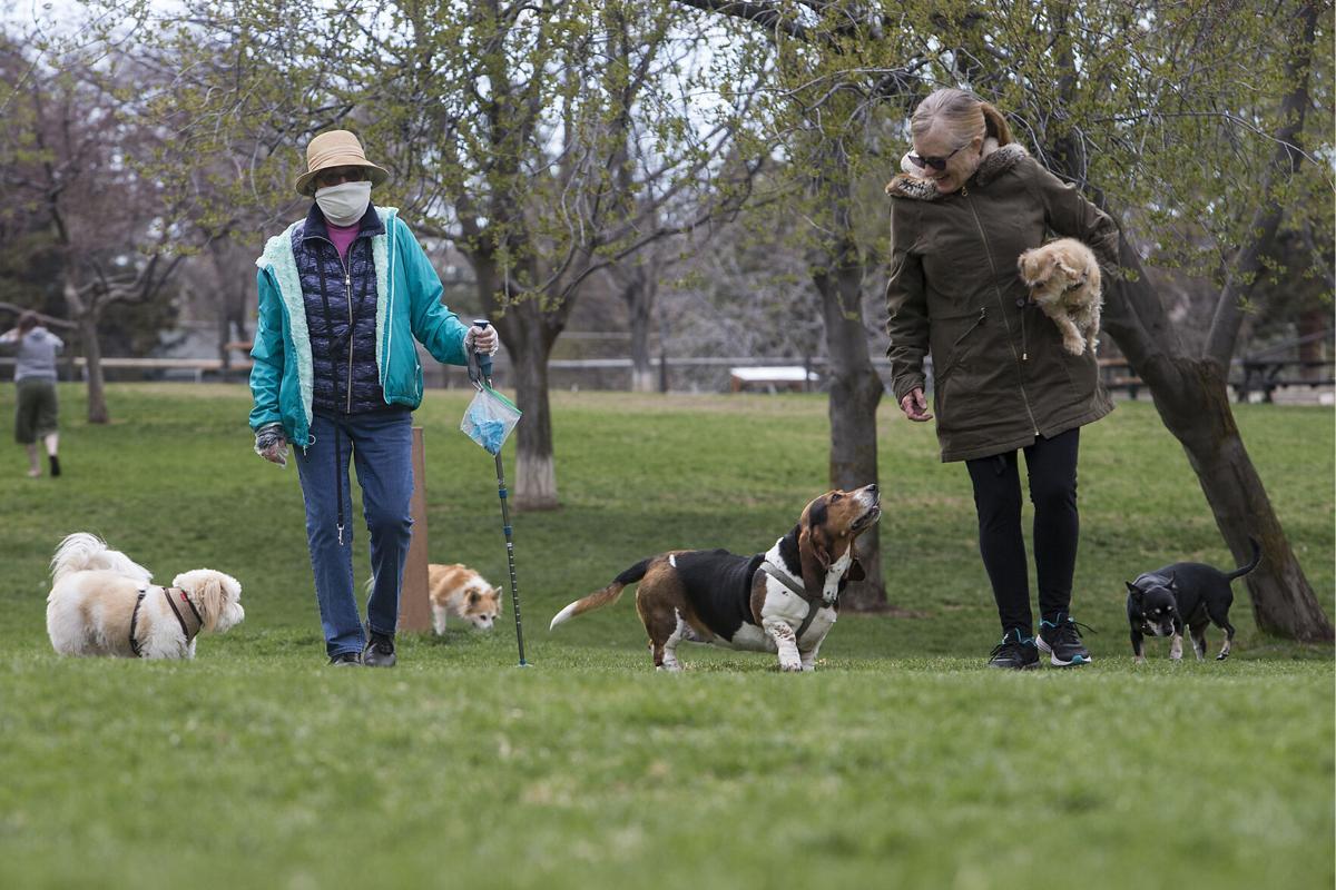 Walking dogs masked (copy)