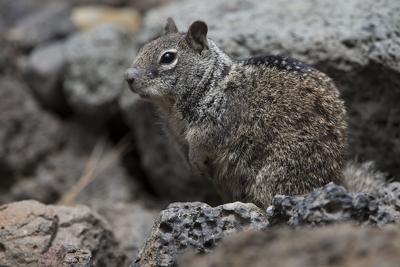 Awbrey Butte neighbors ask city to curb wildlife feeding (copy)