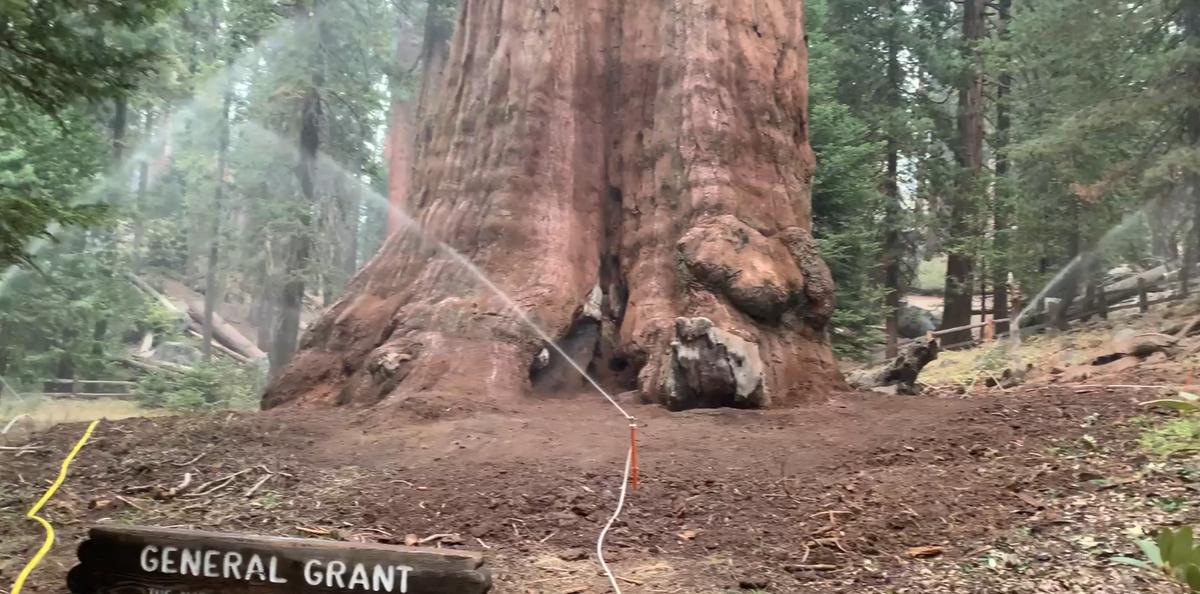 2021_10_06-sequoia gen grant.png