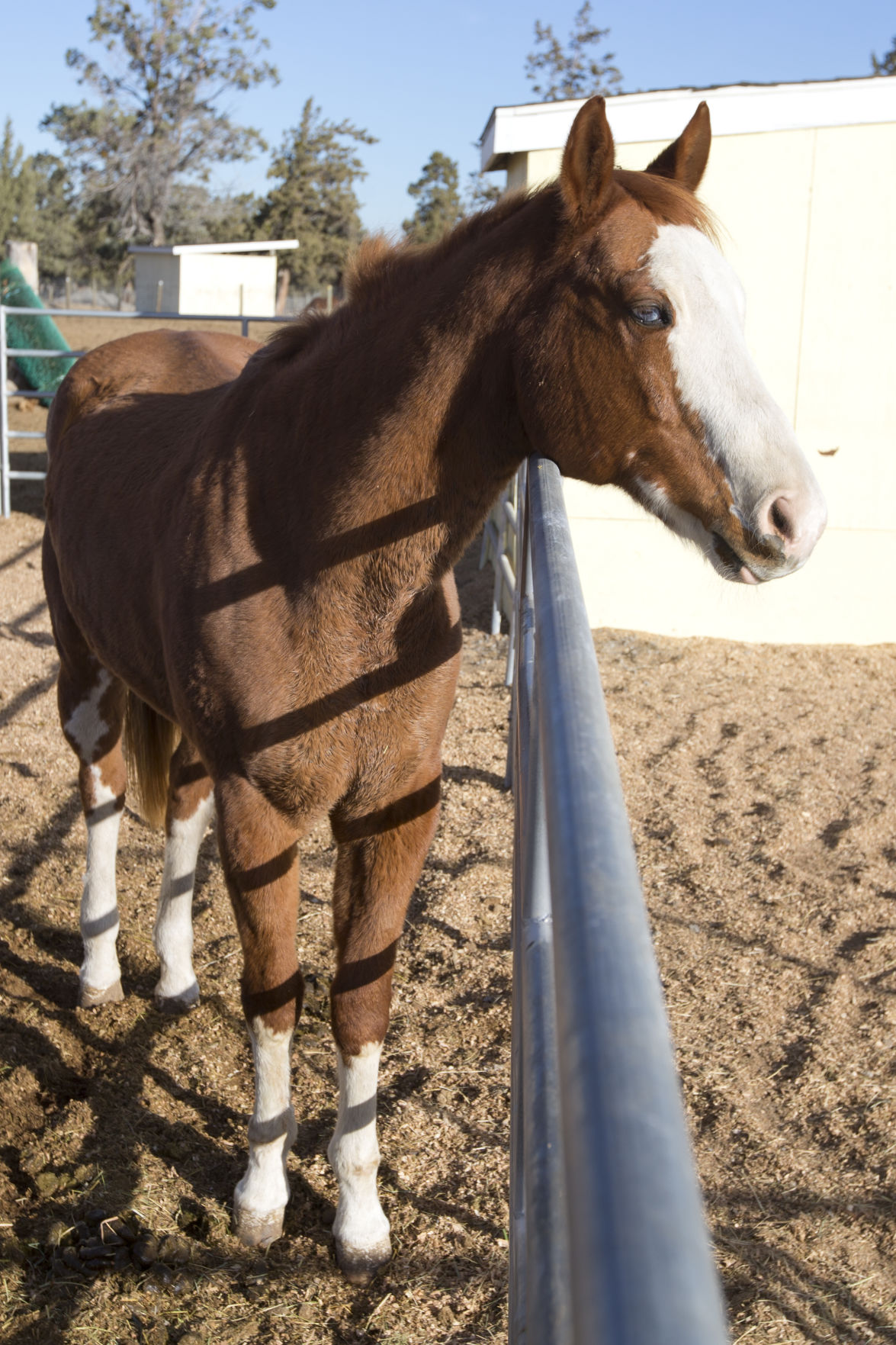 Bend Horse Rescue Close To Shuttering Local State Bendbulletin Com