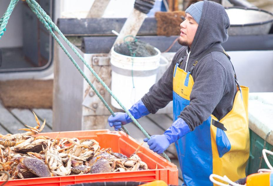 Crew of the F/V Cutting Edge offload crab