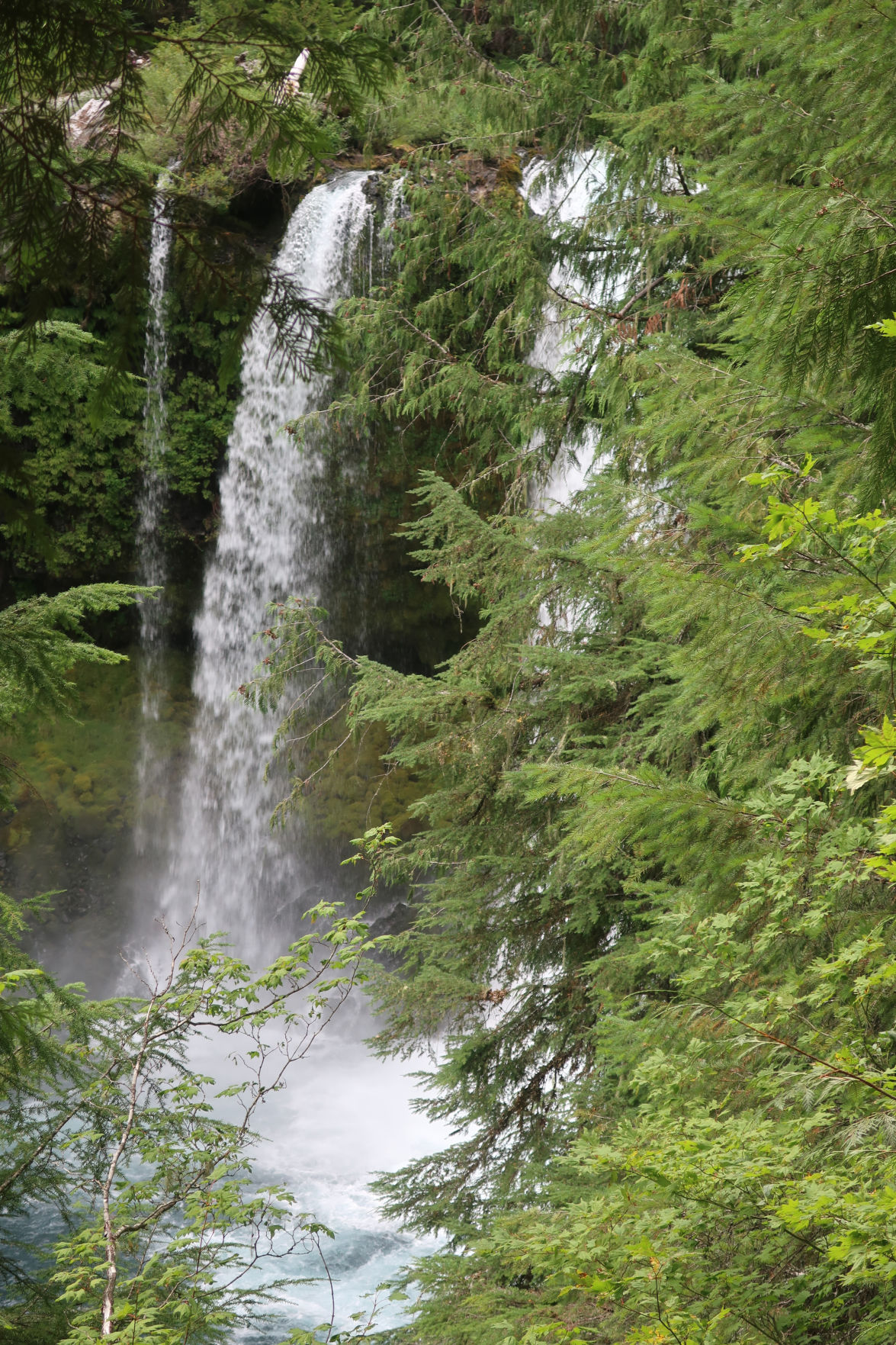 Hiking the waterfalls on the McKenzie River Trail twice is a good idea