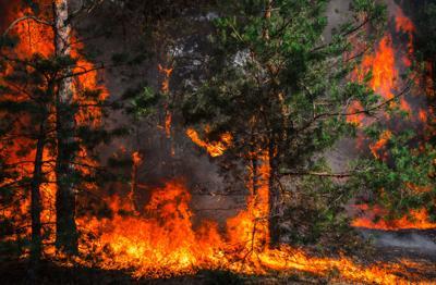 Wildfire plan a good stawrt