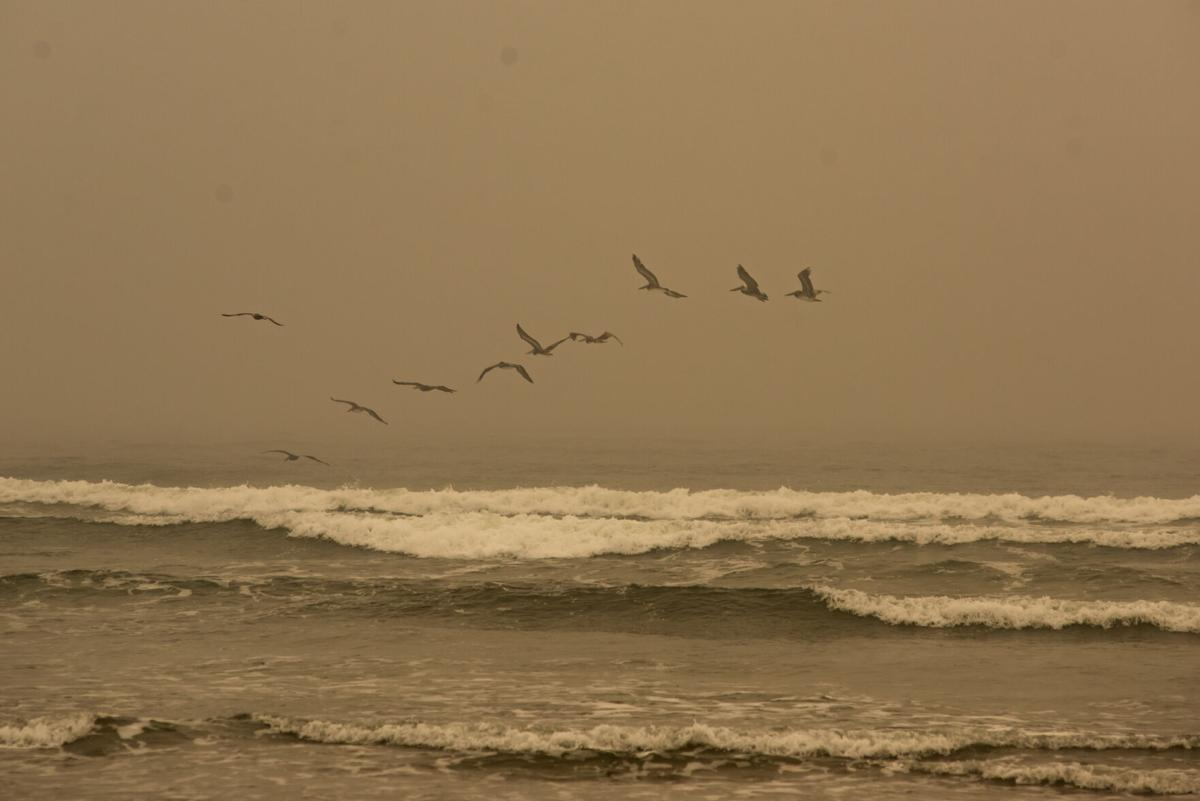 Pelicans (copy)