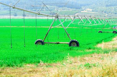 Hay watered with pivot system