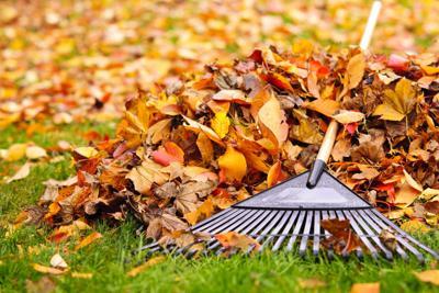 stock_leaves