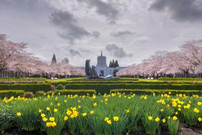 Oregon State Capitol Building with Spring Flowers
