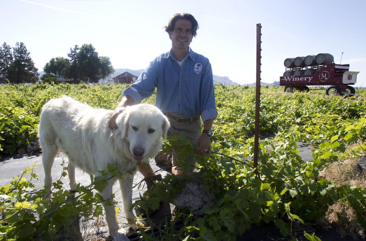 Temps ideal for grape crop