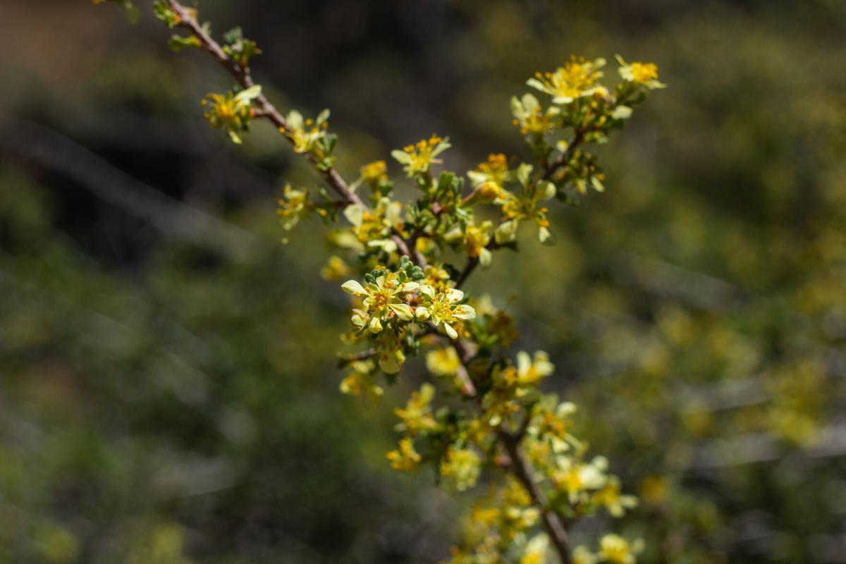Wildflowers-12.jpg