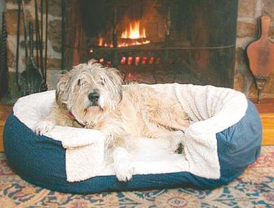 Training Pets To Stay Off Furniture Lifestyle Bendbulletin Com