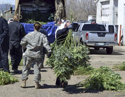 Colorado pot taxes fund busts of illegal growers (copy)