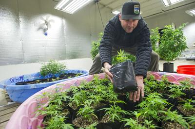 Hemp growers will need OLCC permit to sell in dispensaries