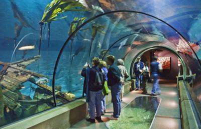 Oregon Coast Aquarium plans $18 million renovation, expansion