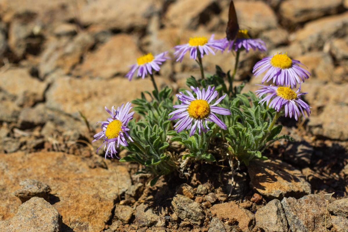 Wildflowers-15.jpg