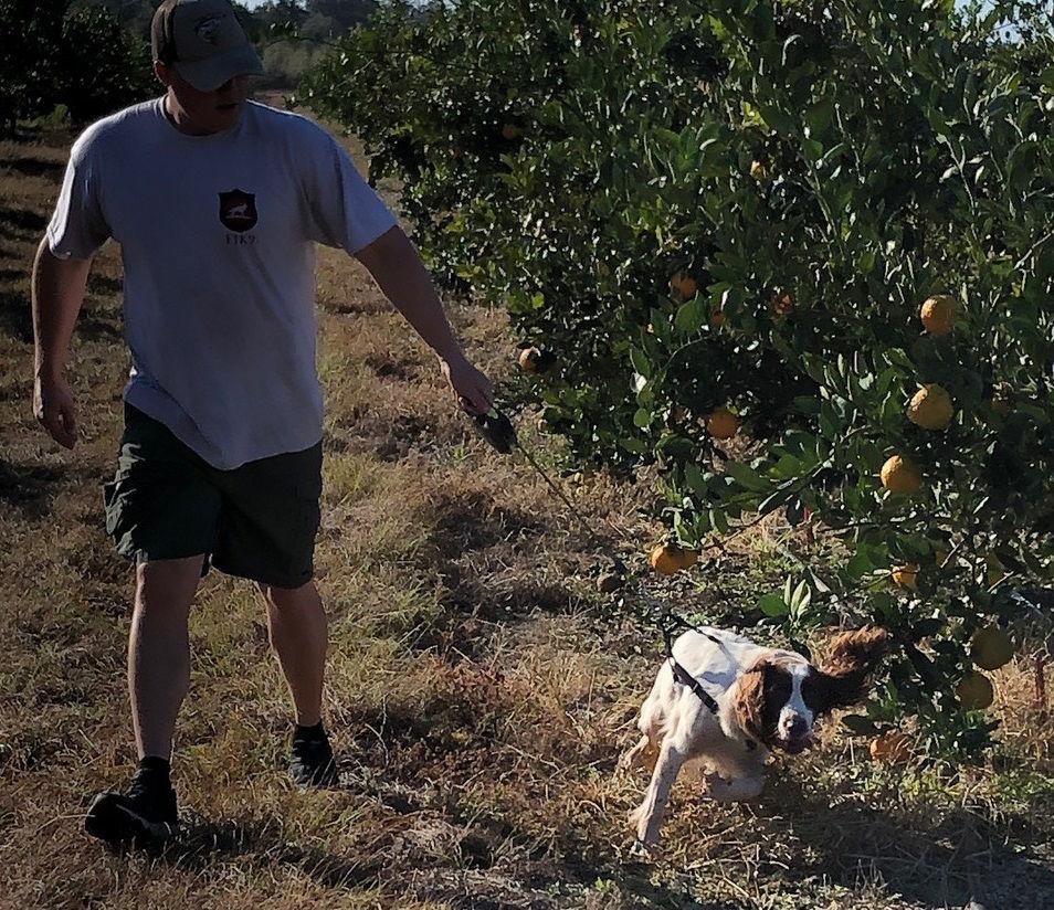 Citrus dogs