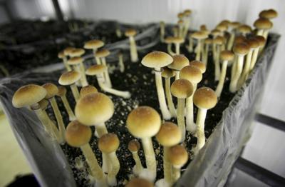 Magic mushrooms may be on the 2020 ballot