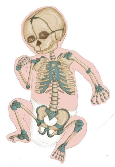 Humans are born with nearly 300 bones, but most adults have around 206
