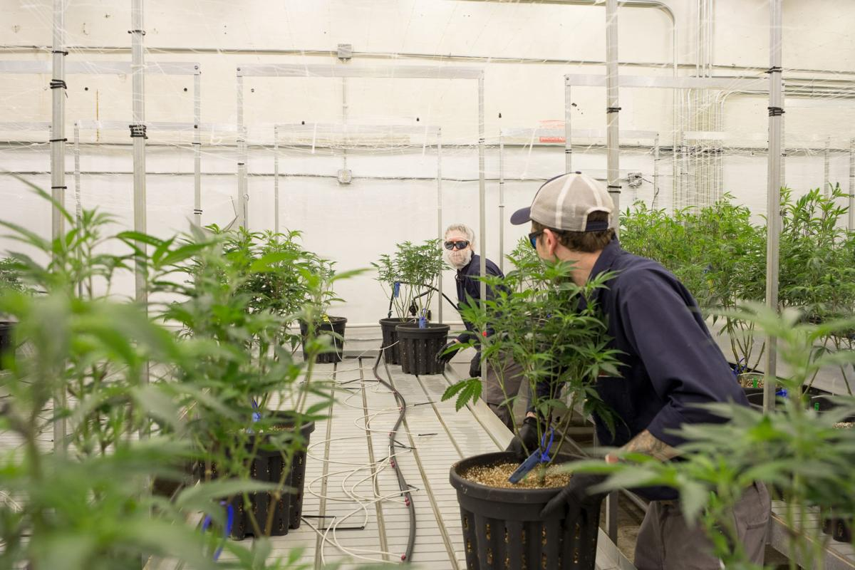 Instead of releasing this greenhouse gas, beer brewers are selling it to pot growers