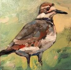 Norris killdeer