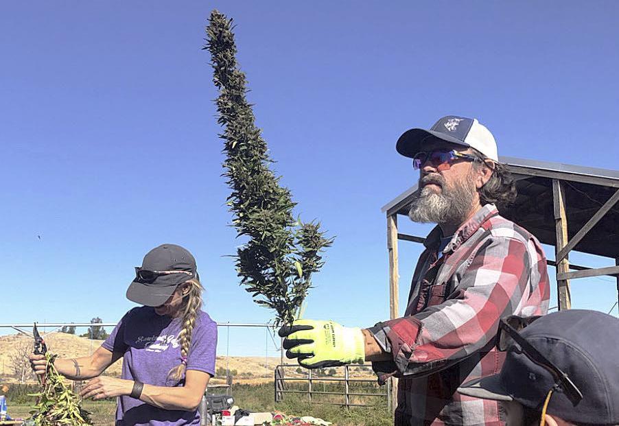 Idaho family grows hemp in Oregon