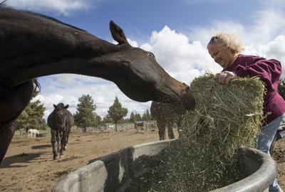 Hay shortage nationwide