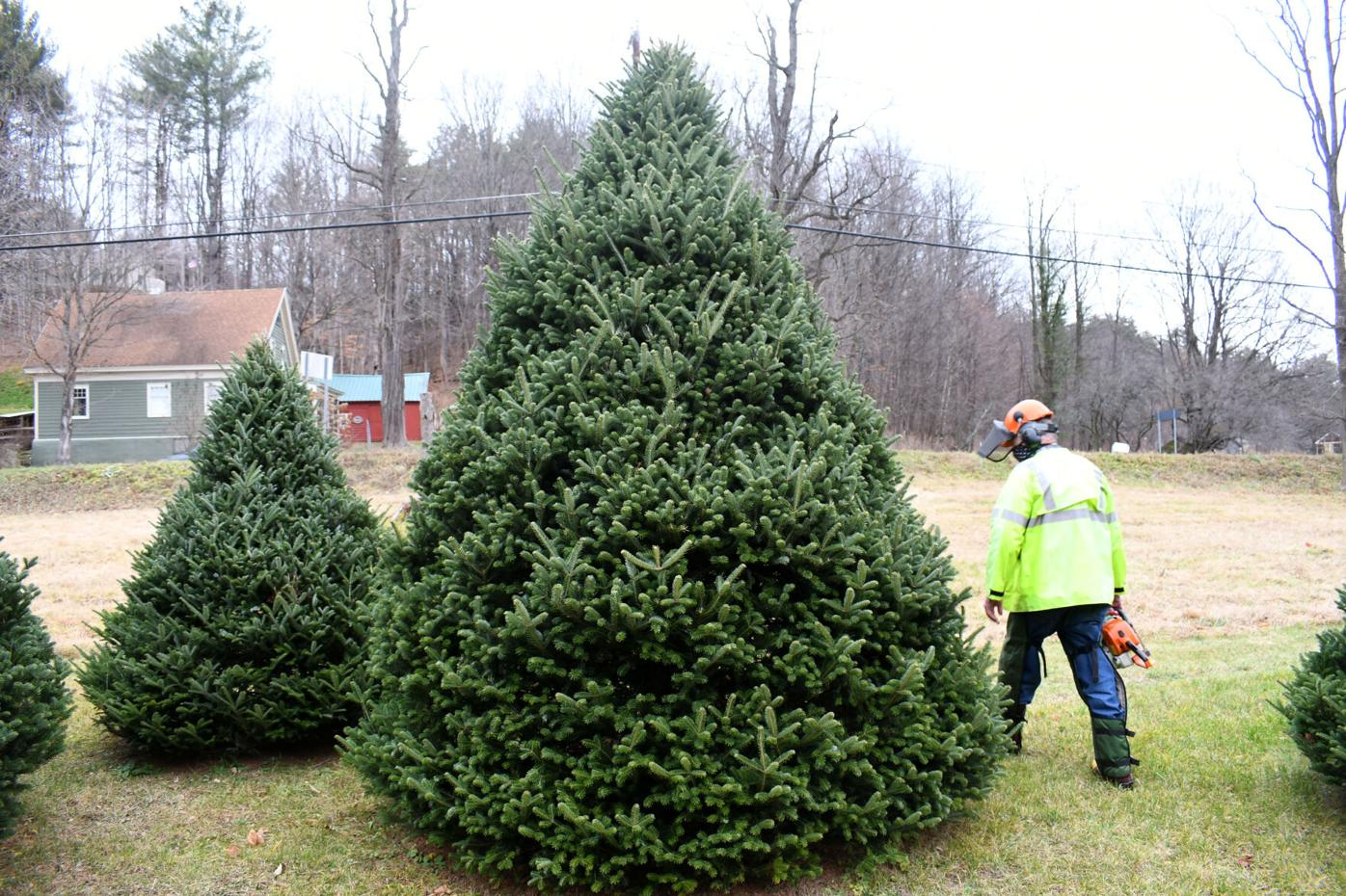Veteran's home Christmas tree