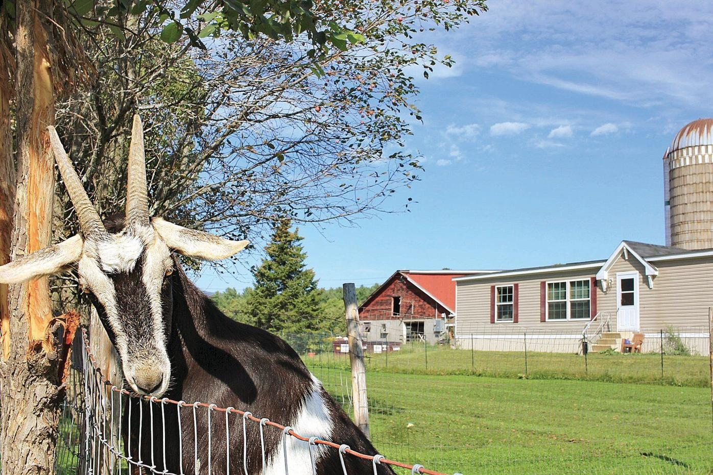 From Adversity To Prosperity North Meadow Farm Grew From Bucket List Item To Dream Come True Entertainment Benningtonbanner Com