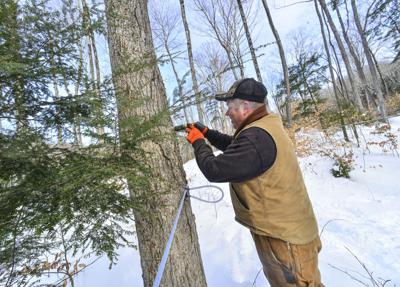 Tapping season leads to golden treats