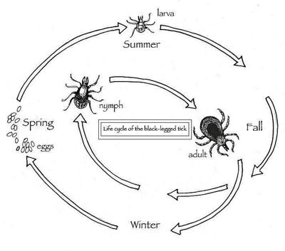 The Outside Story: A plague of ticks: scientists search for solutions