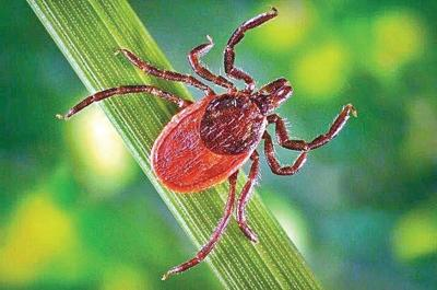 County ranked first in Lyme disease