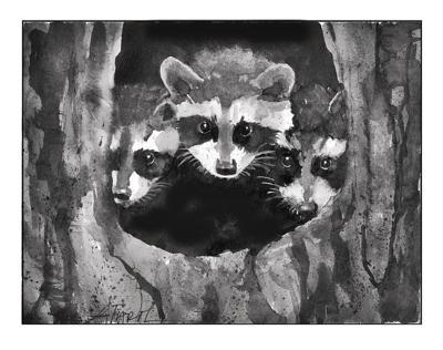 Meghan McCarthy McPhaul: Spring raccoons