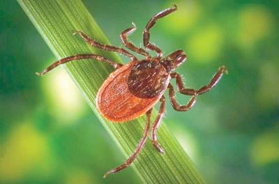 8 things Vermonters should know about Lyme disease