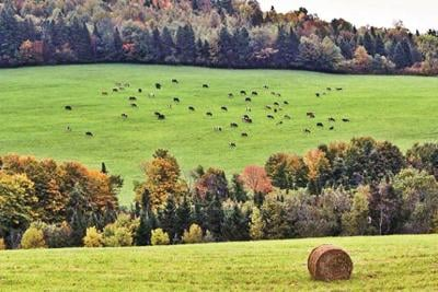 Panel questions agriculture Act 250 exemption