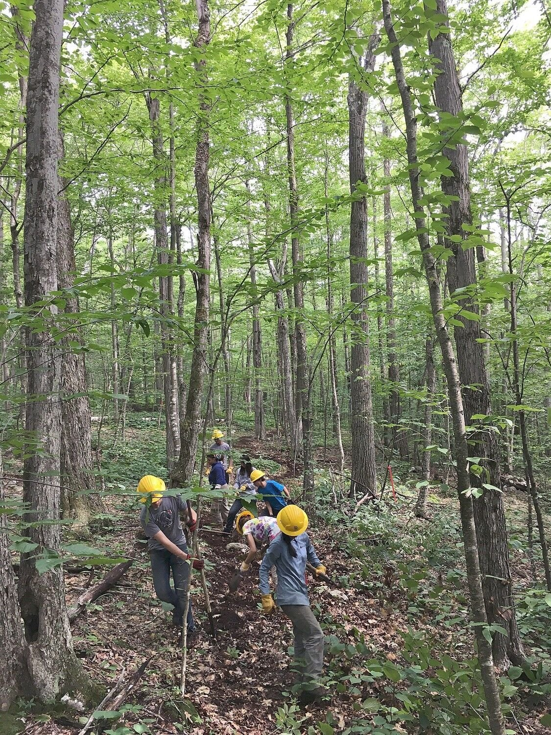 Students volunteer in local forests