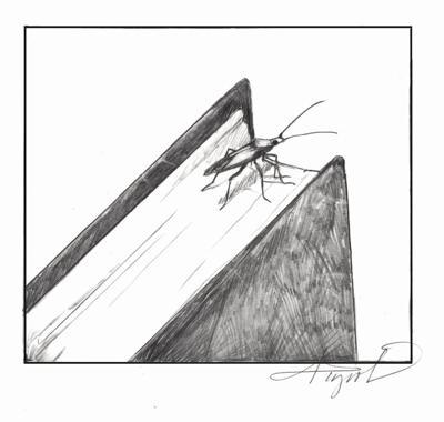 Boxelder and its namesake bugs