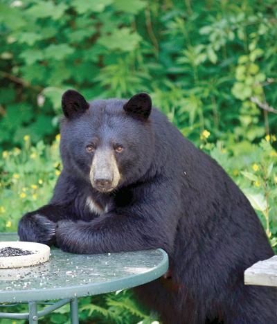With bears waking up, Vermont urges bird feeder removal