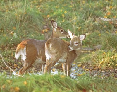 Deer hearings coming May 21 and June 4