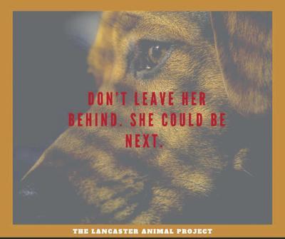 Lancaster Animal Project