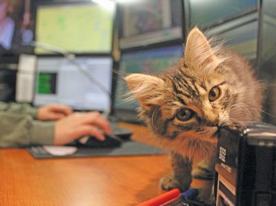 Bryant PD kitty