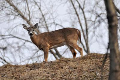 Take me outside: How deer keep warm in the cold months