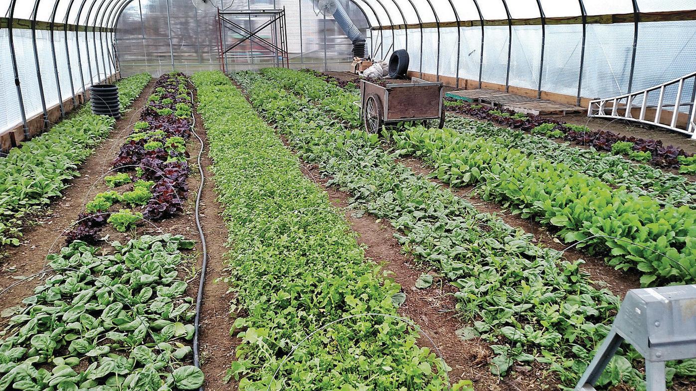 Going green helps Lanesborough farms save green