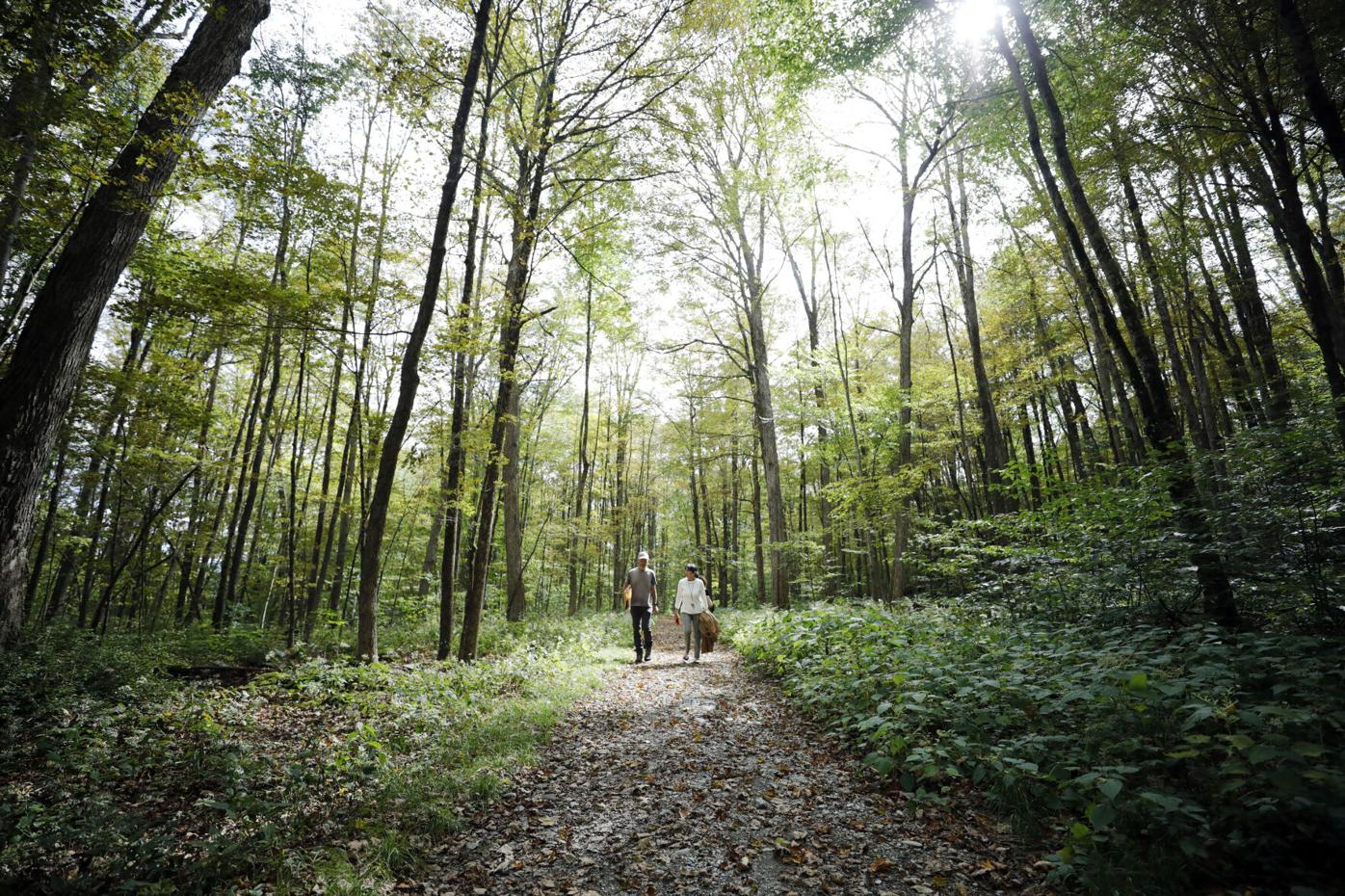 group of people walking on woods trail