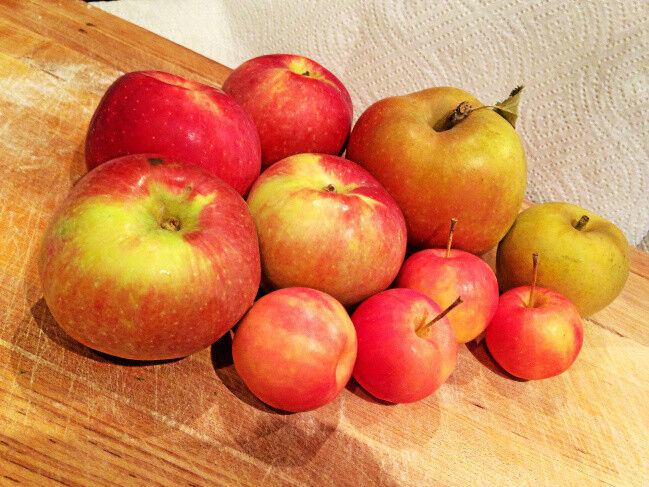 Too many apples? Make apple butter, pie filling