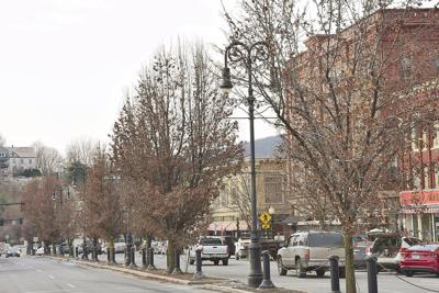 North Adams to `spruce' itself up via 800 tree plantings