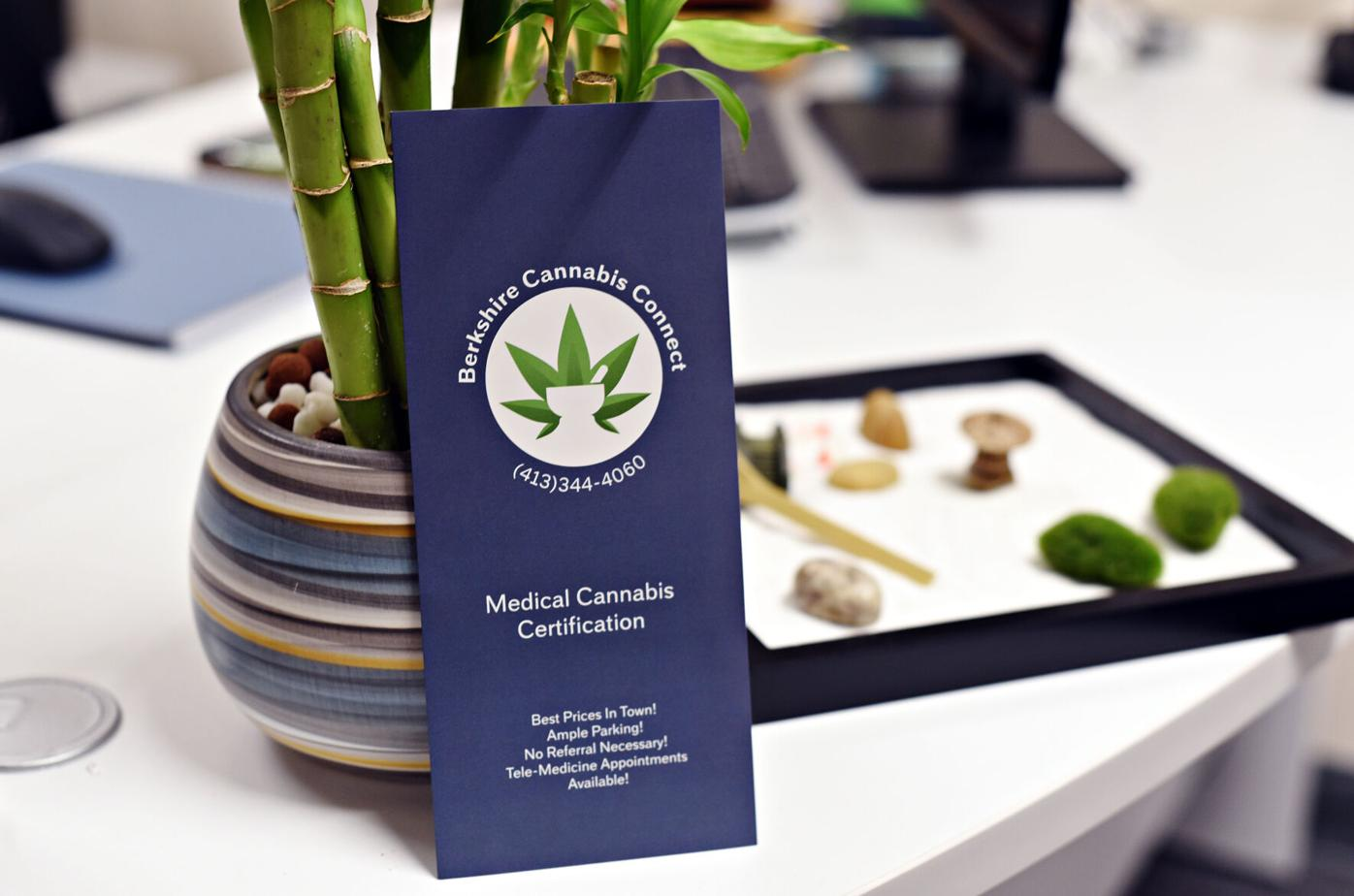 Close up of medical brochure resting on pot of bamboo