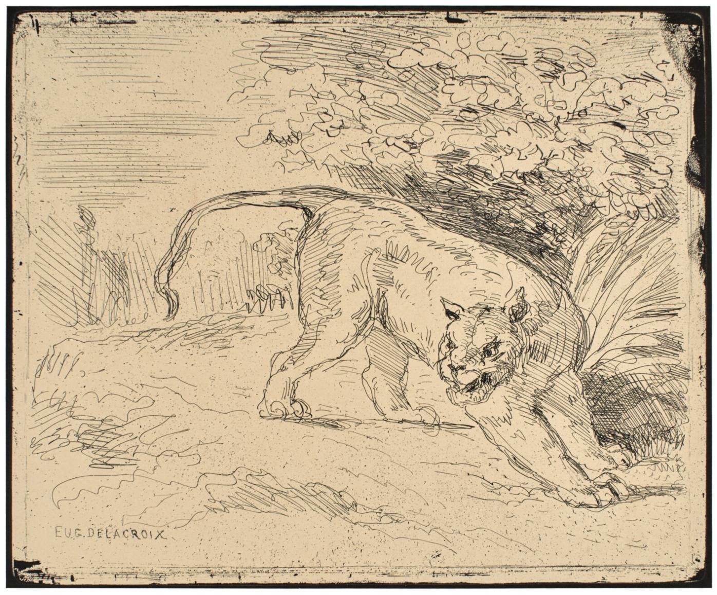 Tiger at Bay