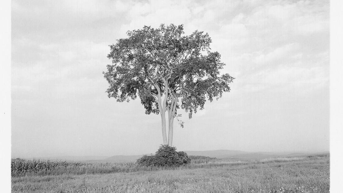 """Photographer shares his lifelong love, respect for trees in """"Portraits of American Trees"""""""